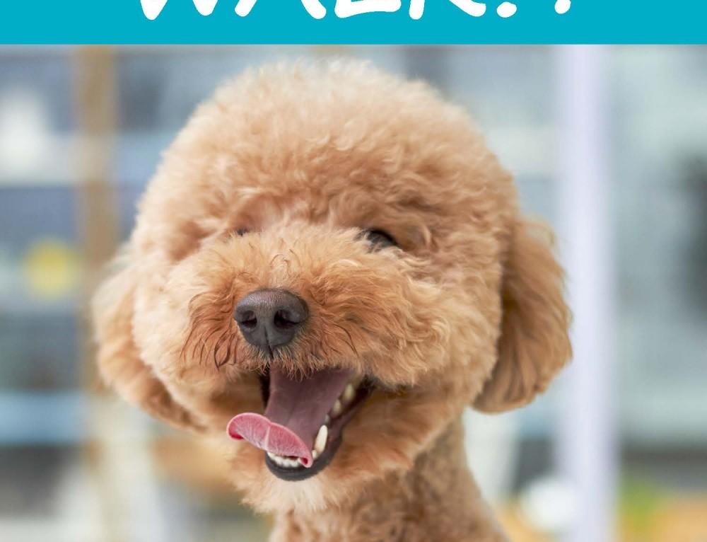 VOTE: Walk4ALZ pet contest