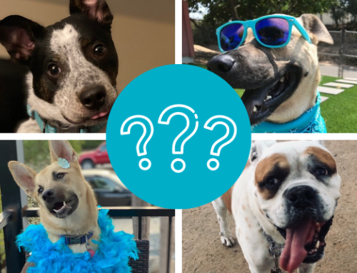 This year's Walk4ALZ Pet Mascot is…
